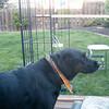 Molly supervises the gazebo construction