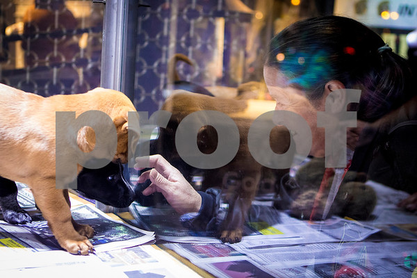 Sam Buckner for Shaw Media.<br /> Debbie Stewart looks at the puppies from Tails Humane Society inside of D&D Jewelers on Friday November 18, 2016.