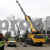 dnews_1128_Tree_removal_01