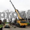 dnews_1128_Tree_removal_01