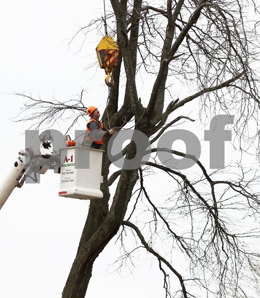 dnews_1128_Tree_removal_02