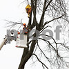 dnews_1128_Tree_removal_02