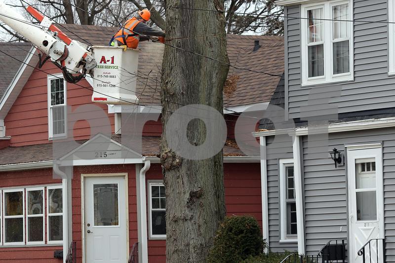 dnews_1128_Tree_removal_03