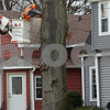 dnews_1128_Tree_removal_03
