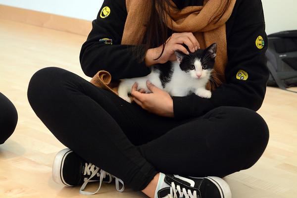11282017 SS Kitten De-stress