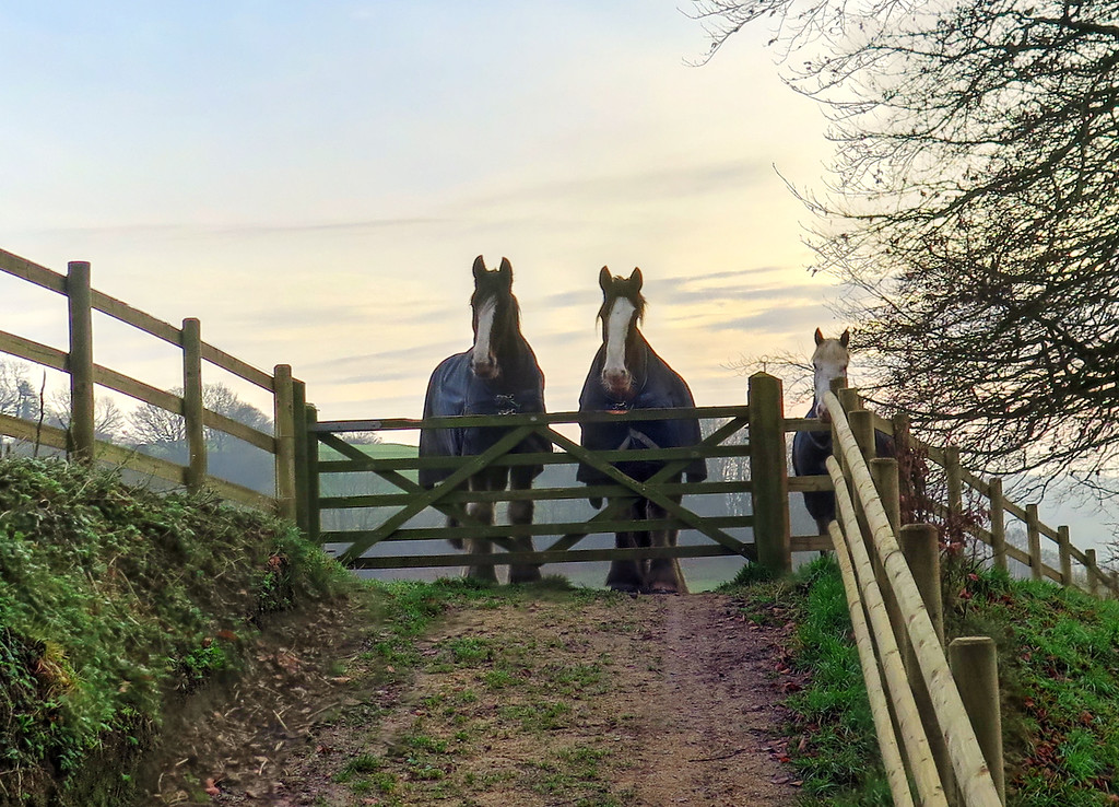 It was said that these horses belong to actor Martin Clunes