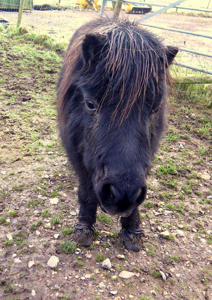 One of several horses and donkeys in the sanctuary near Beaminster Down