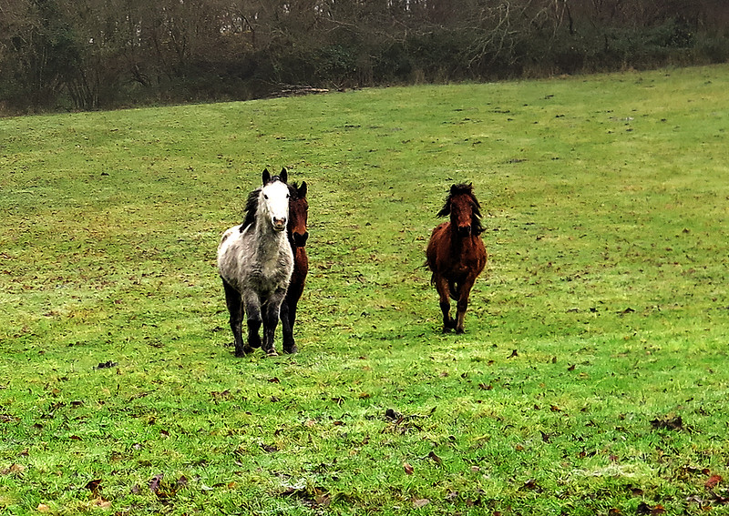 As we walked through this field we met these energetic ponies who galloped over looking for food