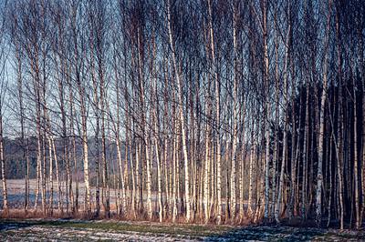 Winter landscape in remote countryside, Poland