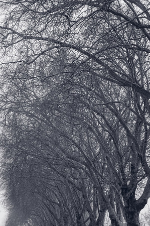 Trees along Lee Conservancy Road, Hackney, London, United Kingdom
