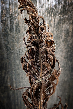 Dry plant, Osiny, Poland