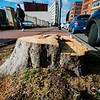 12 29 20 Lynn Central Square trees cut down 4