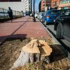 12 29 20 Lynn Central Square trees cut down 5