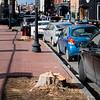 12 29 20 Lynn Central Square trees cut down