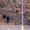 12 6 18 Lynn burned body in Frey Park 1