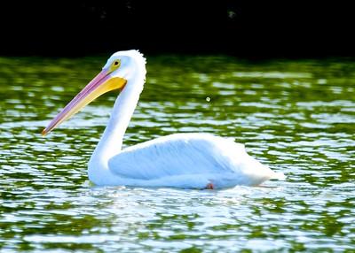 34.River Club Nature_DSC05105