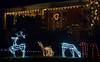 (Bob Raines-/Digital First Media) <br /> Deer prance on York St., Lansdale Dec. 21, 2017.
