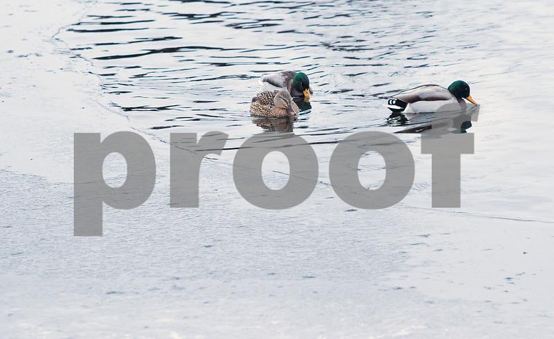 dnews_1223_Water_Fowl_03
