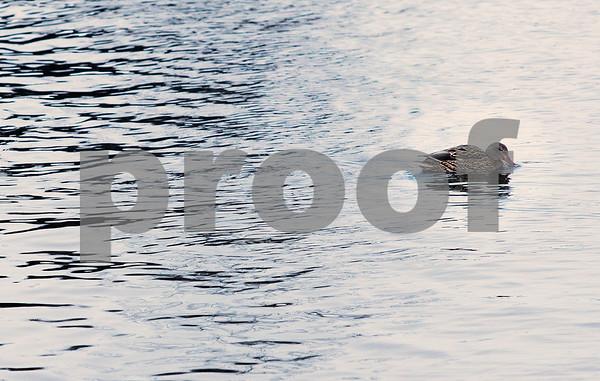 dnews_1223_Water_Fowl_01