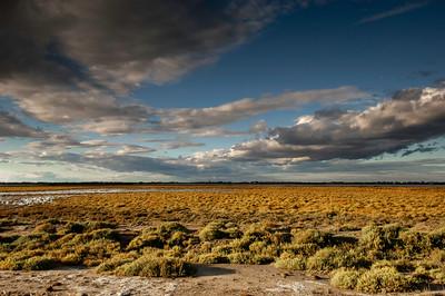 Europe, France, Provence, Camargue, marshes surrounding Les Stes-Maries-de-la-Mer