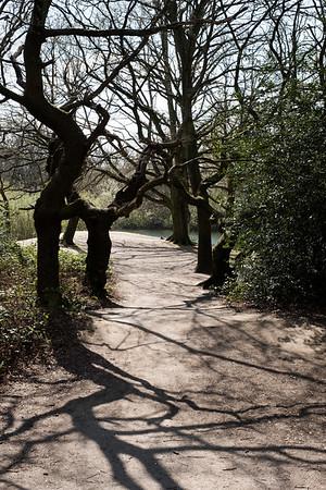 Woodland by Hollow Ponds, London, United Kingdom