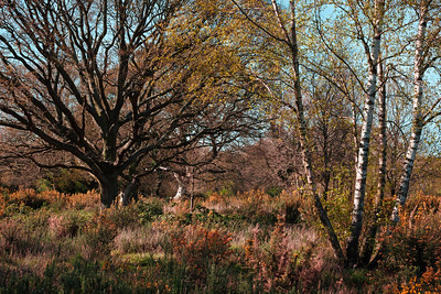 Hollow Ponds, Laytonstone, London, United Kingdom