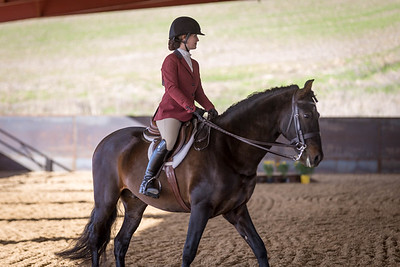 (1/27/18) Working Equitation Show
