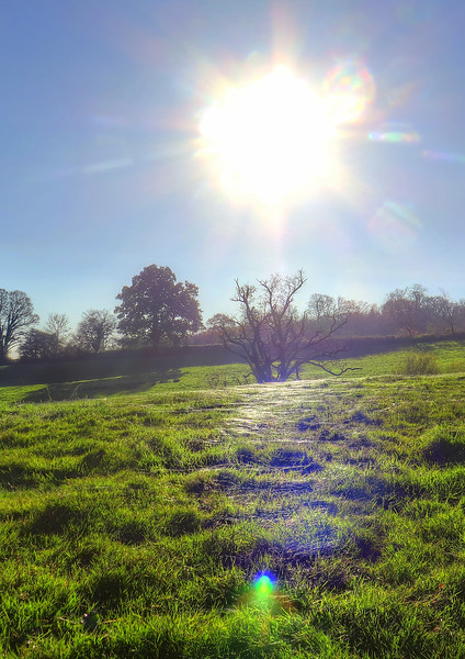 We arrived at the lunch stop and hundreds of cobwebs can be seen decorating the field catching the sun's rays