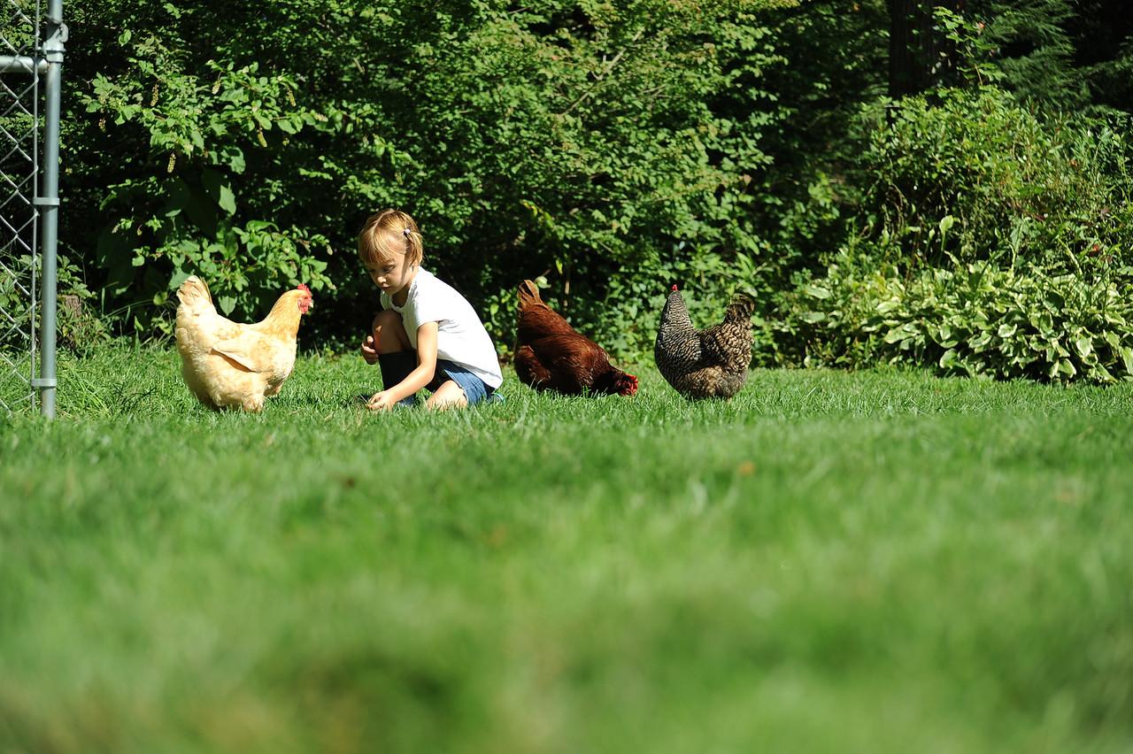14chicken3 (3 of 4)
