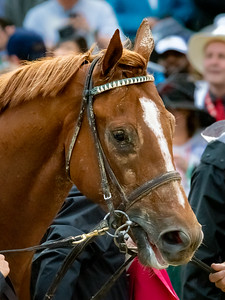Country House the Winner of the 145th KY Derby  4-2-19 - Churchill Downs - by Steven Bullock -2-2
