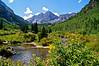 Wild berries and lush vegetation along lower Maroon Creek; Colorado Elk Range.