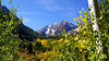 The aspens begin to turn; Maroon Bells Wilderness, Colorado Elk Range.