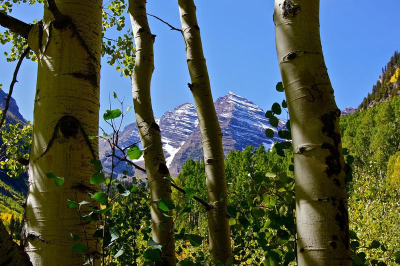 Through the aspen grove; Maroon Bells wilderness, Colorado Elk Range.