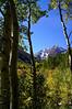 Aspen shade; Maroon Bells wilderness, Colorado Elk Range.