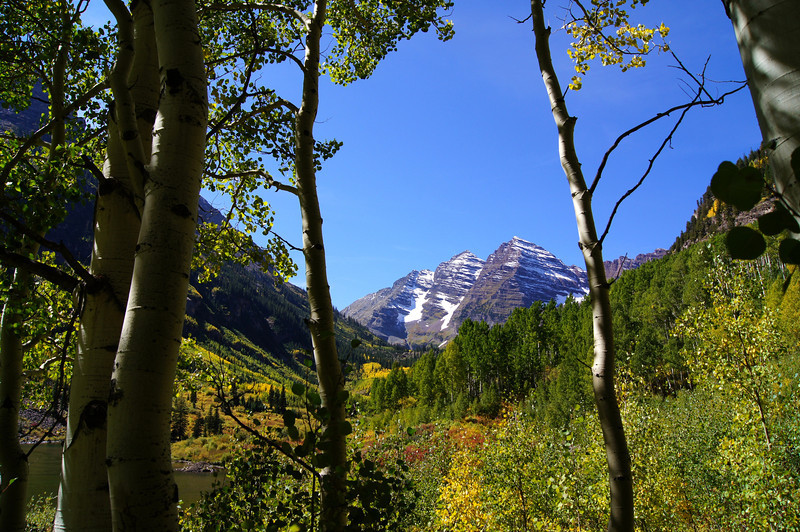 At the edge of an aspen grove; Maroon Bells wilderness, Colorado Elk Range.