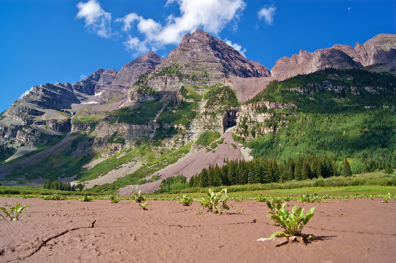 High altitude plant life struggles for survival in the dry, cracked bed of Crater Lake beneath the Maroon Bells; Colorado Elk Range.