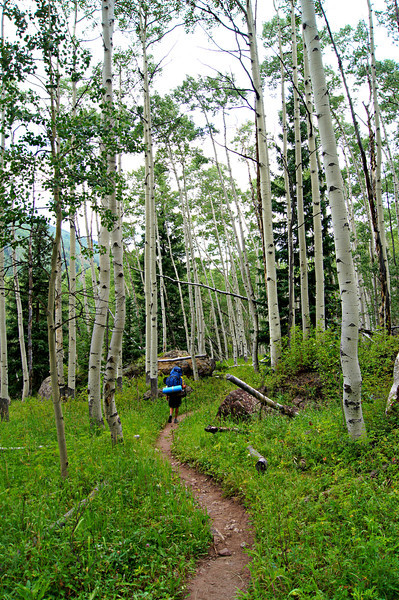 Backpacking through aspens on the Snowmass Lake trail; Colorado Elk Range