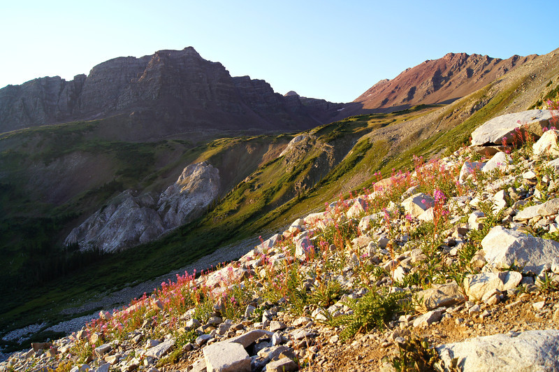 Wildflowers on the east slopes of Snowmass Mountain beneath 13ers Snowmass Peak and Hagerman Peak; Colorado Elk Range