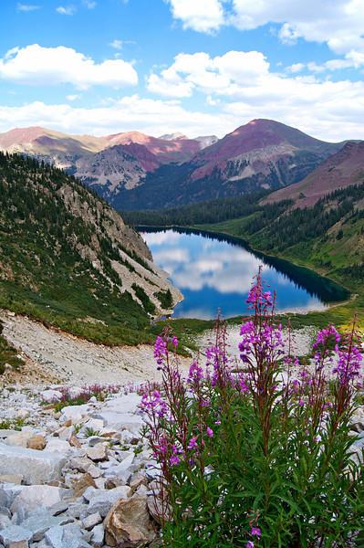 Wildflowers amid the scree above Snowmass Lake; Colorado Elk Range