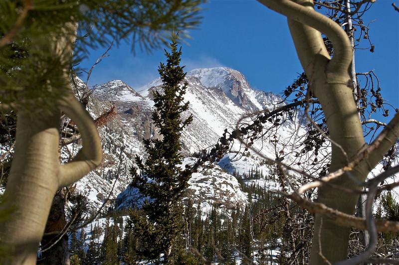 Wind-swept Longs Peak framed by wind-twisted aspens along the Emerald Lake trail; Rocky Mountain National Park, Colorado.