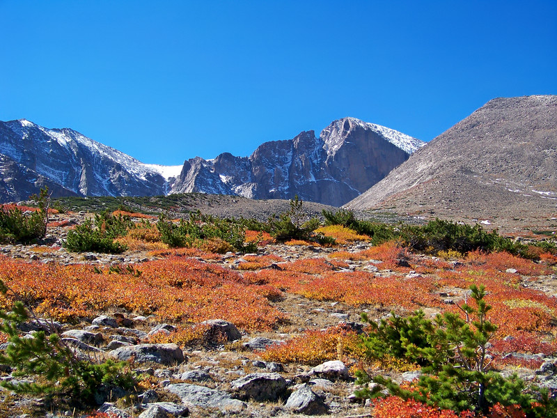 Fall colors in the alpine foliage beneath Longs Peak, Rocky Mountain National Park