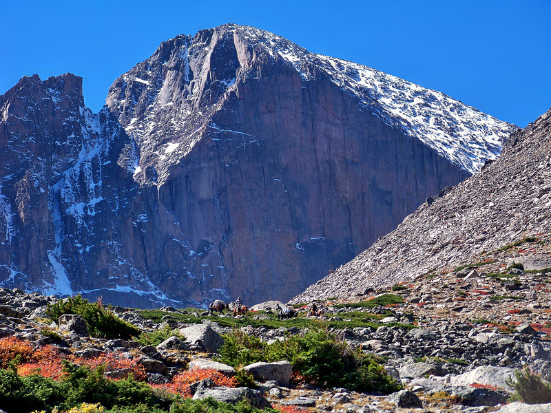"Workers pack supplies out on horseback beneath the majestic Longs Peak ""Diamond Face.""  Rocky Mountain National Park"