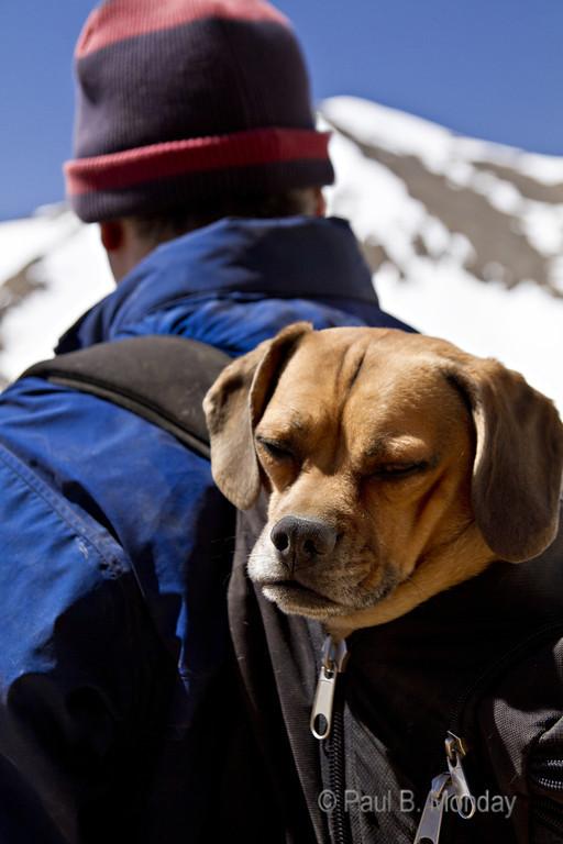 Sometimes, man is dog's best friend