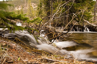 Water flowing over branches and log jams on the way from the mountains and into the fields around Fairplay.