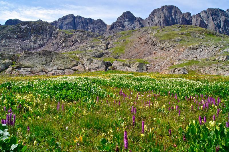 Wildflowers in the upper American Basin beneath Handies Peak; Colorado San Juan Range.