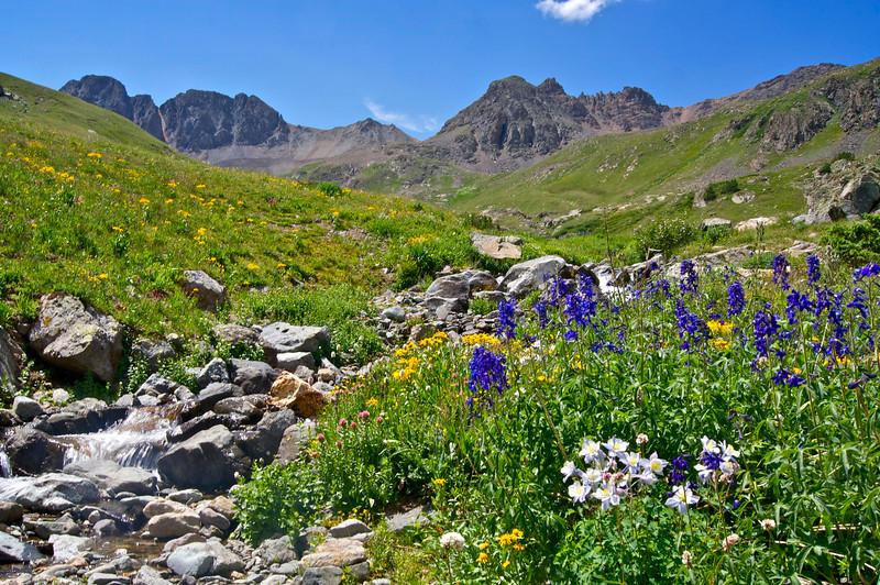A wide variety of wildflowers grow  in the American Basin beneath Handies Peak; Colorado San Juan Range.