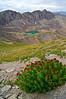 Even at 13,700 ft., wildflowers thrive on the western side of Handies Peak; Colorado San Juan Range.