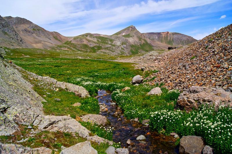 Looking northward down the lush upper American Basin beneath Handies Peak; Colorado San Juan Range.
