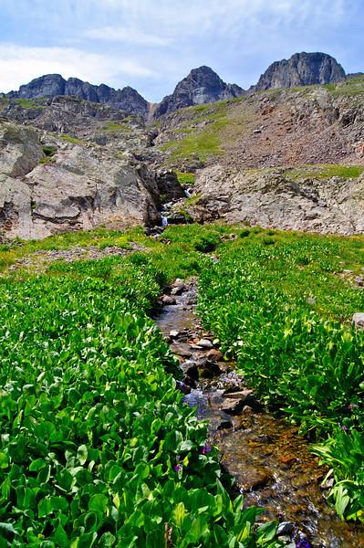 Lush, green vegetation and wildflowers in the upper American Basin beneath Handies Peak; Colorado San Juan Range.
