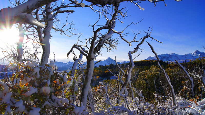 Bright morning sunlight on the icy autumn foliage; Mount Sneffels Wilderness, Colorado.